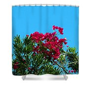 Red Bougainvillea Glabra Vine Shower Curtain