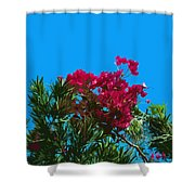 Red Bougainvillea Glabra Vine In Juniperus Virginiana Tree In Co Shower Curtain
