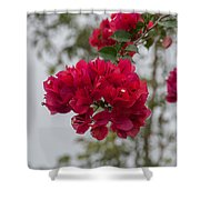red bougainvillea in Laguna Guerrero Shower Curtain