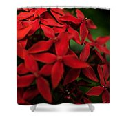 Red Bouquet 7 Shower Curtain