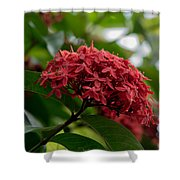 Red Bouquet 9 Shower Curtain
