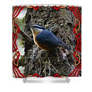 Red Breasted Nuthatch 2 Shower Curtain