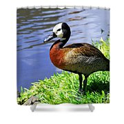 Red Breasted Wood Duck Shower Curtain
