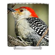 Red-breasted Woodpecker 1 Shower Curtain