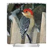 Red Breasted Woodpecker On Fence Shower Curtain