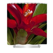 Red Bromiliad Shower Curtain