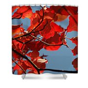 Red Brown And Blue Shower Curtain
