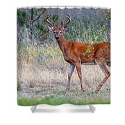 Red Bucks 1 Shower Curtain by Antonio Romero