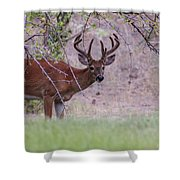 Red Bucks 2 Shower Curtain by Antonio Romero