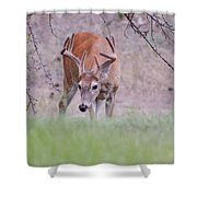 Red Bucks 6 Shower Curtain by Antonio Romero