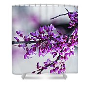 Red Bud Branch Shower Curtain