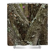 Red Bud Row Shower Curtain