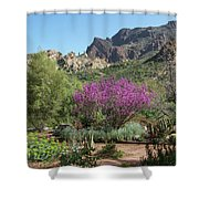 Red Bud Tree On Path Shower Curtain