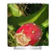 Red Bulb Shower Curtain