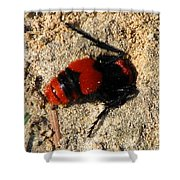 Red Burrowing Insect Shower Curtain