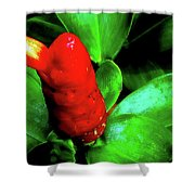 Red Button Ginger Shower Curtain