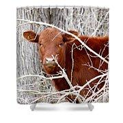 Red Calf  Hideaway Shower Curtain
