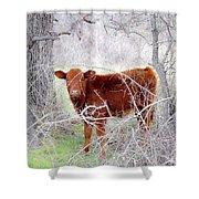 Red Calf In Winter Brush Shower Curtain