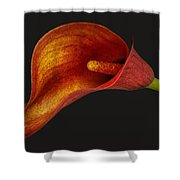 Red Calla Lily Shower Curtain