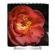 Red Camellia Bloom Shower Curtain