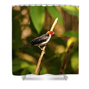 Red Capped Cardinal Shower Curtain