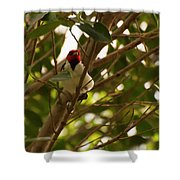 Red-capped Cardinal Digital Oil Shower Curtain