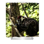 Red-capped Mangabey Shower Curtain