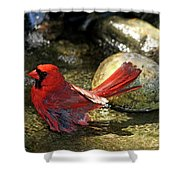 Red Cardinal Bathing Shower Curtain