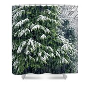 Red Cedar And Snow Shower Curtain