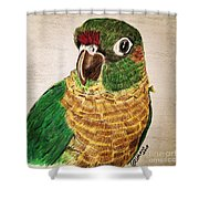 Green Cheeked Conure Shower Curtain