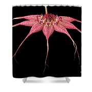 Red Chimney #2 Shower Curtain