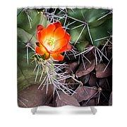 Red Claretcup Cactus Shower Curtain
