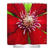 Red Clematis Shower Curtain