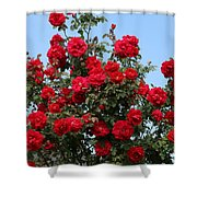 Red Climbing Roses Shower Curtain
