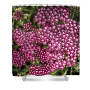 Red Cluster Shower Curtain
