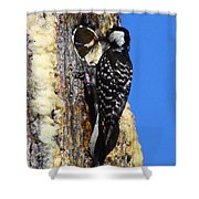 Red Cockaded Woodpecker Mother Feeding Shower Curtain