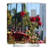 Red Coronado Roses Shower Curtain