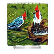 Red-crested Cardinal Birds #77 Shower Curtain