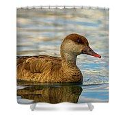 Red-crested Female Pochard Duck, Netta Rufina Shower Curtain