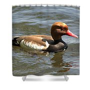 Red-crested Pochard Shower Curtain