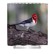 Red Crested Posing Shower Curtain