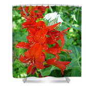 Red Crocosmia Lucifer Shower Curtain