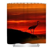 Red Crowned Crane At Dusk Shower Curtain