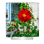 Red Dahlia By Window Shower Curtain