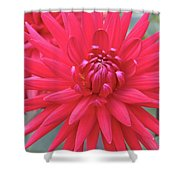 Red Dahlia Delight Shower Curtain