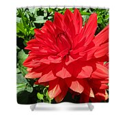 Red Dahlia In The Green Shower Curtain
