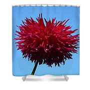 Red Dahlia Purple Dahlia Flower Art Prints Baslee Troutman Shower Curtain