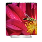 Red Dahlia With Wasp Shower Curtain
