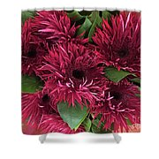 Red Daisies Bouquet Shower Curtain