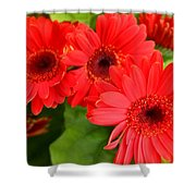 Red Daisies Shower Curtain